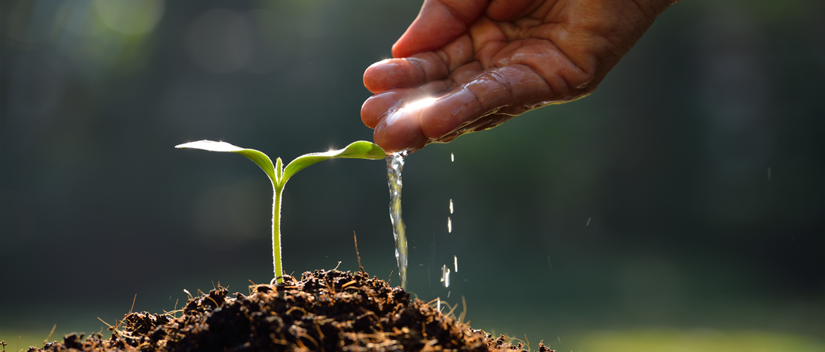 bigstock-Young-plant-85163372